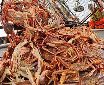 ประเภทอาหารทะเลของอลาสก้า
